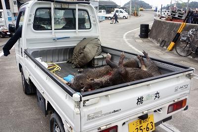 桃取町御棚祭(駆除された猪)54